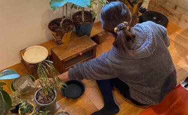 2階リビングと観葉植物
